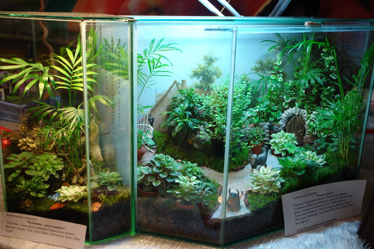 Большой флорариум из аквариума