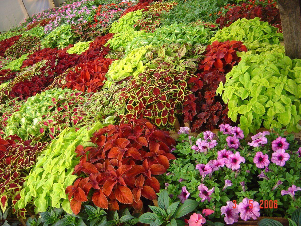 Какие многолетники цветов сажают осенью 905